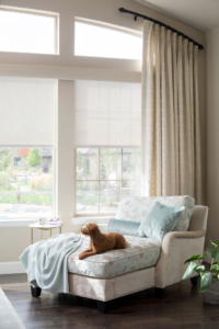 chaise lounge by window with dog Lafayette